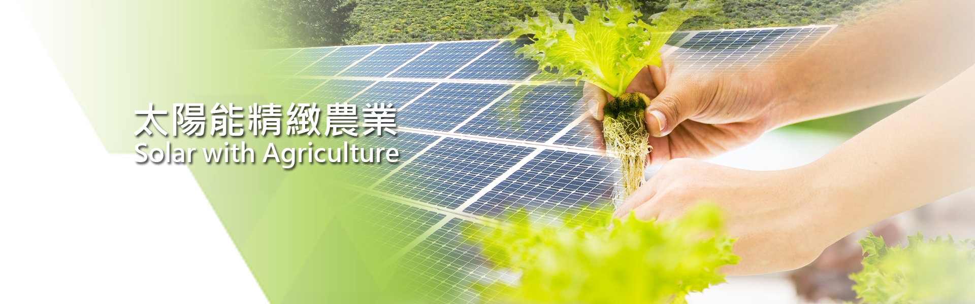 Solar with Agriculture
